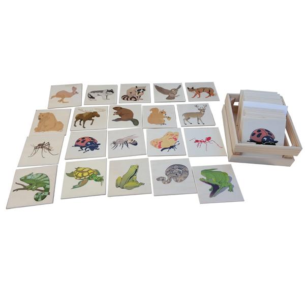 Insekti, životinje iz šume -gmizavci životinje sa magnetom 2D 4+